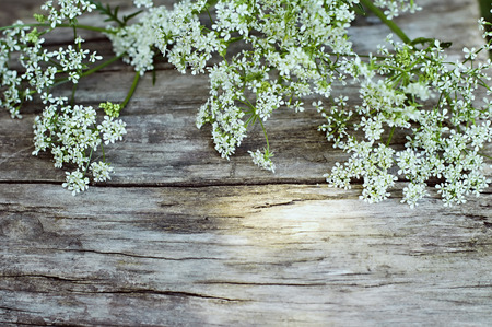Summer white flowers on vintage wooden background