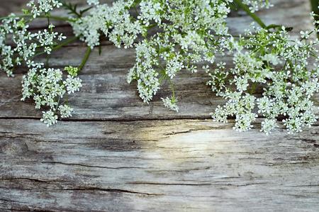 champ de fleurs: Fleurs blanches d'été sur fond de bois millésime