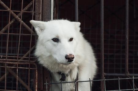 perro triste: Perro triste en la jaula. Virada en sepia Foto de archivo