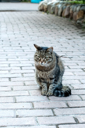 paw smart: Cat. Lonely cat sitting on the road