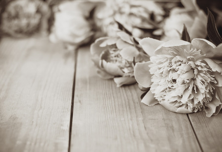 fragile peace: Sepia flowers on wooden background. Soft focus