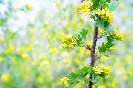 thrifty: Blur spring blossom background. Stock Photo