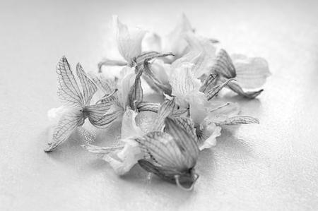 fiori secchi: Dead orchid. dried flowers. Black and white photo Archivio Fotografico