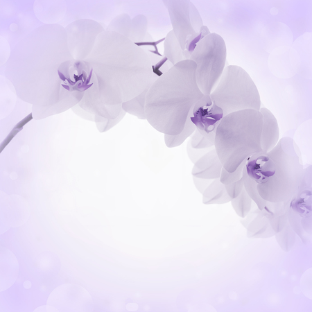 peaceful background: Lilac background with orchid flowers