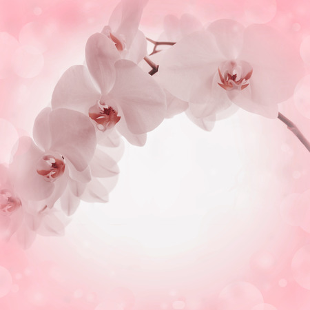 incarnadine: Pink background with orchid flowers
