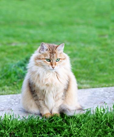 grapnel: Cat. Lady-cat