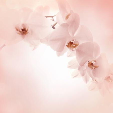 Orchids pink background, Banner delicate floral background Standard-Bild