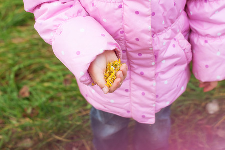 Little girl Playing in Autumn Park Leaves. Child hand with seeds photo