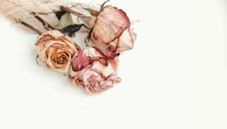 Dried roses stacking on a white background Stock Photo