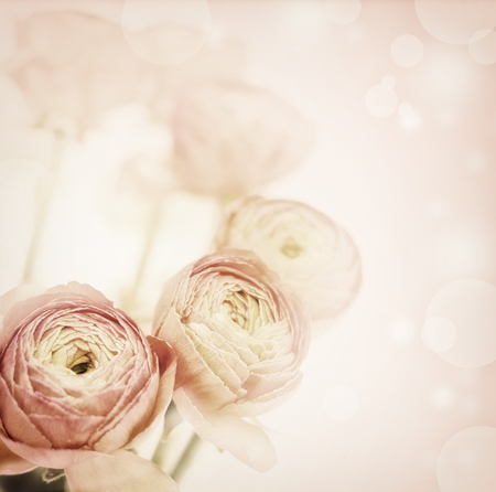 beautiful flowers made with color filters . Vintage floral background.