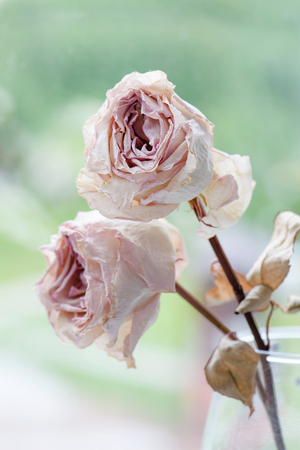Dried faded two roses on blurred boreh background