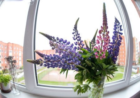 A bouquet of lupines beautiful flowers on the window