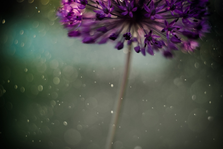 Abstract nature floral background. Magic bokeh sunlit air droplets.