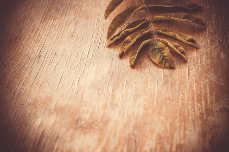 Green leaf fallen from mountain ash tree on an old wooden background. Summer autumn background of fall leaves on the wooden board, top view