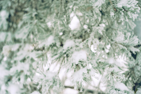 Defocused image of pine tree branch in the snow. Blurred beautiful winter nature background. Soft selective focus. Vintage toned photo.
