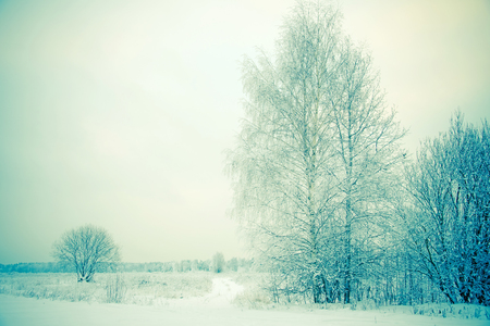 Winter landscape, snow cover on the branches of trees, drifts, a field in the snow. Winter nature background. Vintage toned photo, copy space. 写真素材