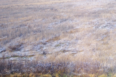 Background autumn natural field with dry grass, covered with it. Dried December blade of grass covered with frost. Natural wild winter field blurred background