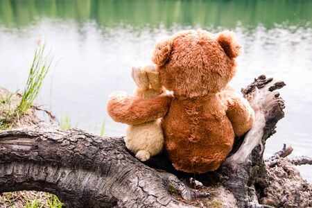 True friends - the bunny and teddy little bear are sitting side by side on the shore of a forest lake, dreaming and remembering. Look forward, hug. Back view
