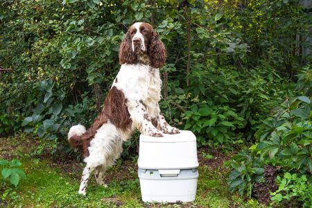 A chemical portable toilet and a dog are standing on a green meadow. The concept of cleaning dogs excrement on street 版權商用圖片