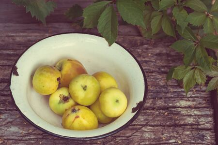 Yellow paradise apples in a bowl on wooden backgound  in garden. Vintage toned
