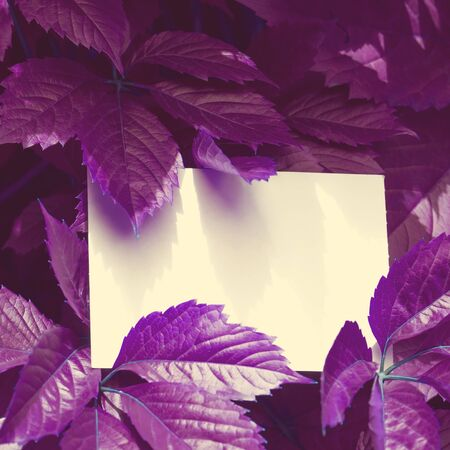 Creative colored purple leaves layout. Supernatural concept. Flat lay, copy space, white card. Ultra violet colors toned photo. Stock fotó