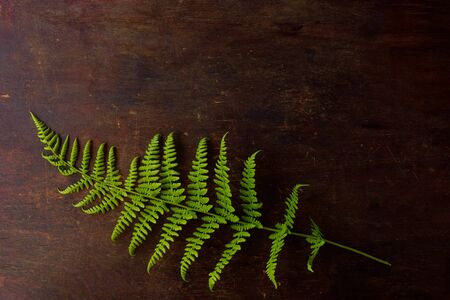 A concept of minimalist lifestyle, delicate green fern leaf on old wooden table background. Top view with copy space. Flat lay Stockfoto