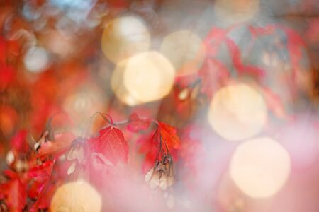 Orange light and red beautiful autumn leaves in beautiful fall park. Golden sunset and bokeh background