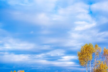 Blue clouds sky and a tree with autumn leaves. Фото со стока