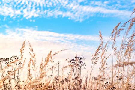 Autumn field. Dry grass and blue sky. Selective focus.