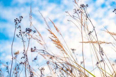 Autumn field. Dry grass and blue sky. Selective soft focus. Фото со стока