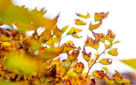 Beautiful autumn nature. Cloudy sky, dry leaves on plant on meadow.