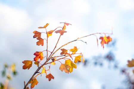 Beautiful autumn nature. Cloudy sky, branch with dry leaves Фото со стока
