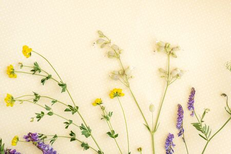 Flower pattern of wildflowers. Composition of flowers and plants. Top view. Floral abstract background. Flower concept.