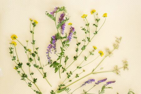 Flower pattern of wildflowers. Composition of flowers and plants. Top view. Floral abstract background. Flower concept.  Фото со стока
