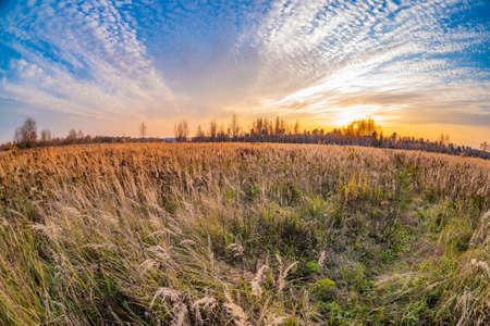 Prairie landscape with grasses, meadows, trees and a bright blue sky with white clouds.Tall grass and weeds overgrown in a field. Stock Photo
