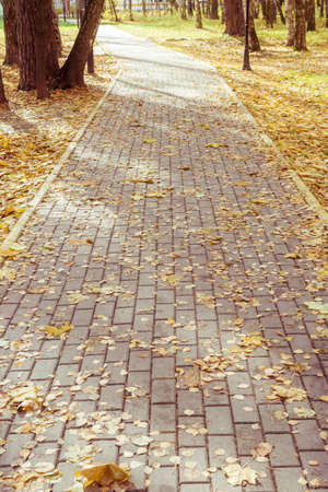 The path in the park, in the fallen leaves, and sun shadows. Vertical natural background.