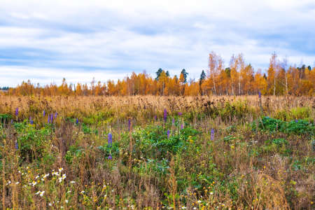 Prairie fall landscape with autumn grasses, meadows, trees and a bright blue sky with white clouds.