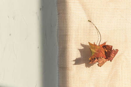 Dried maple leaf over mesh tablecloth or net curtain and shadows with copy space. Composition with autumn foliage, textile cloth and shade. Tender leafage of fall season, flat lay of minimalist botany