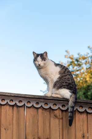 Cat pet sitting on wooden fence view against sky