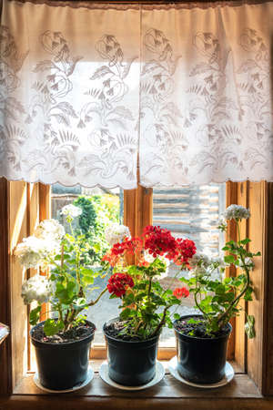 Blooming potted house plants on windowsill at home