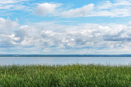 Green reeds on lake bank under blue sky with fluffy clouds 写真素材