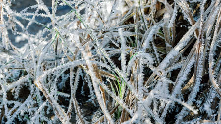 Beautiful patterns of frost crystals on the grass, leaves and branches. Morning frost. Rime. Late fall