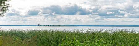 Green reeds on lake bank under blue sky with fluffy clouds Standard-Bild