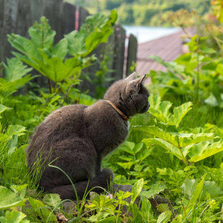 Grey cat with green eyes sits in grass at old wooden fence