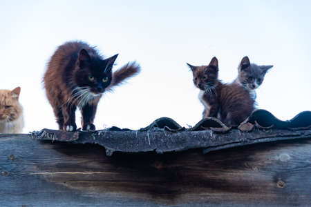 Family of cats sitting and walking on roof fence