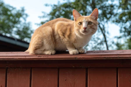 Adorable cat sits on vintage wooden fence at summer sunset Standard-Bild