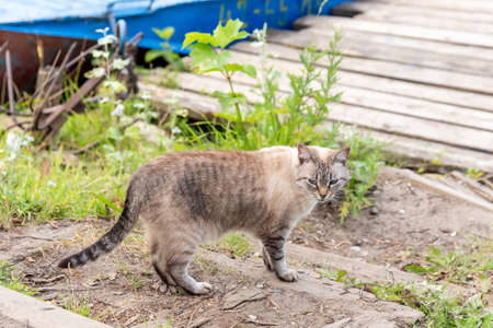 Grey cat stay in grass at old wooden fence Standard-Bild