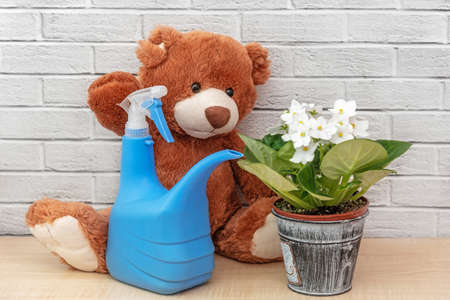 Sweet brown stuffed toy and house plant on shelf. Plants in house Reklamní fotografie