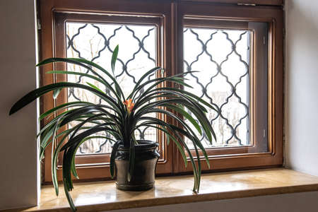 Home plant on windows for decorative design Stock fotó