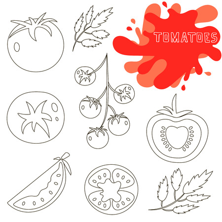 tomates: Conjunto de tomates rojos saludables frescas hechas en el estilo de l�nea. Grande para el dise�o de estilo de vida saludable o la dieta. Solo tomate, la mitad de un tomate, una rodaja de tomate, tomate cherry. Ilustraci�n del vector.